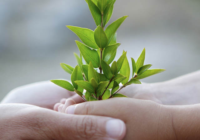 An adult's hands hold a child's hands that are supporting a sapling