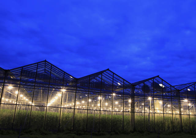 A greenhouse lit up at night