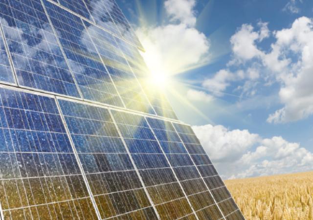 Solar panels in a wheat field