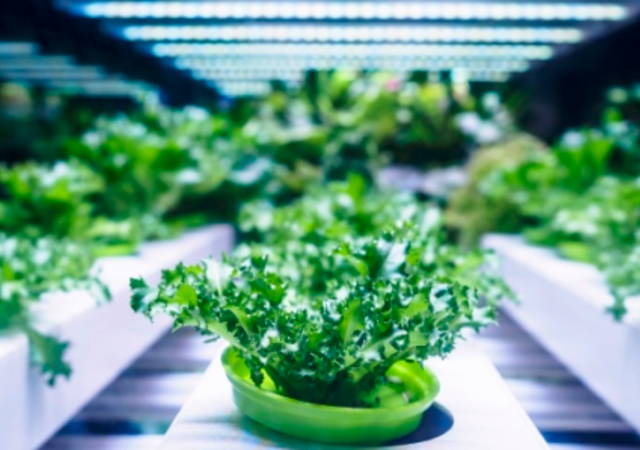 Cannabis growing farm