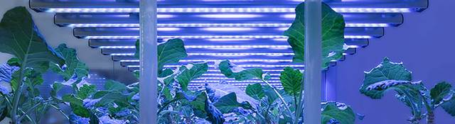 LED Agriculture
