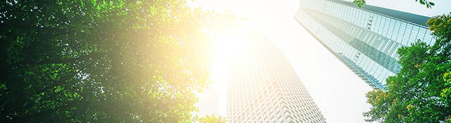 View of glass skyscrapers and sunny sky through trees