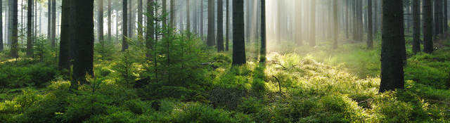 woods and sunlight