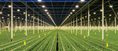 Indoor growing facility of plants