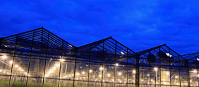 Outside looking in view of a cannabis farm at night.