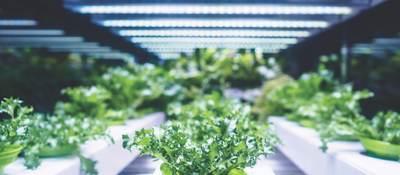 Greenhouse plants growing under lights