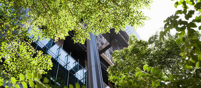 A view of the office building through green trees in front