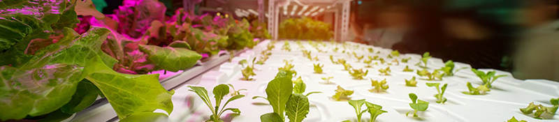 Indoor growing facility lighting and safety