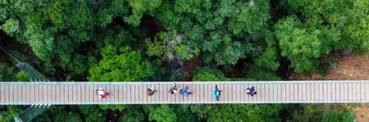 People on suspension bridge over tree tops