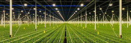 Horticultural lighting greenhouse lighting farming