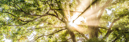 Sunshine through treetop canopy