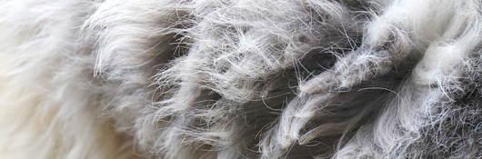Fur Bans in the U.S. Webinar