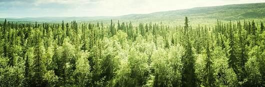 Overlook of tree tops