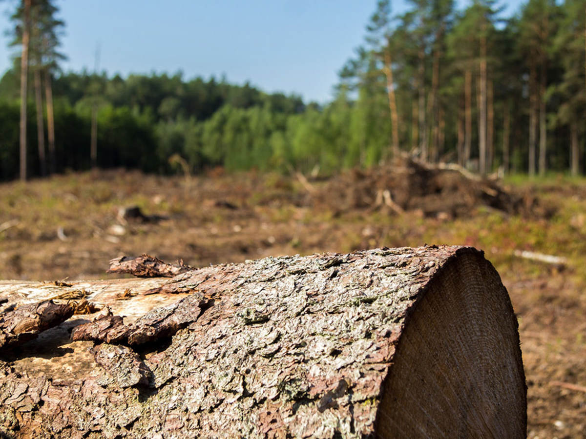 Deforestation as shown by fallen tree and barren landscape
