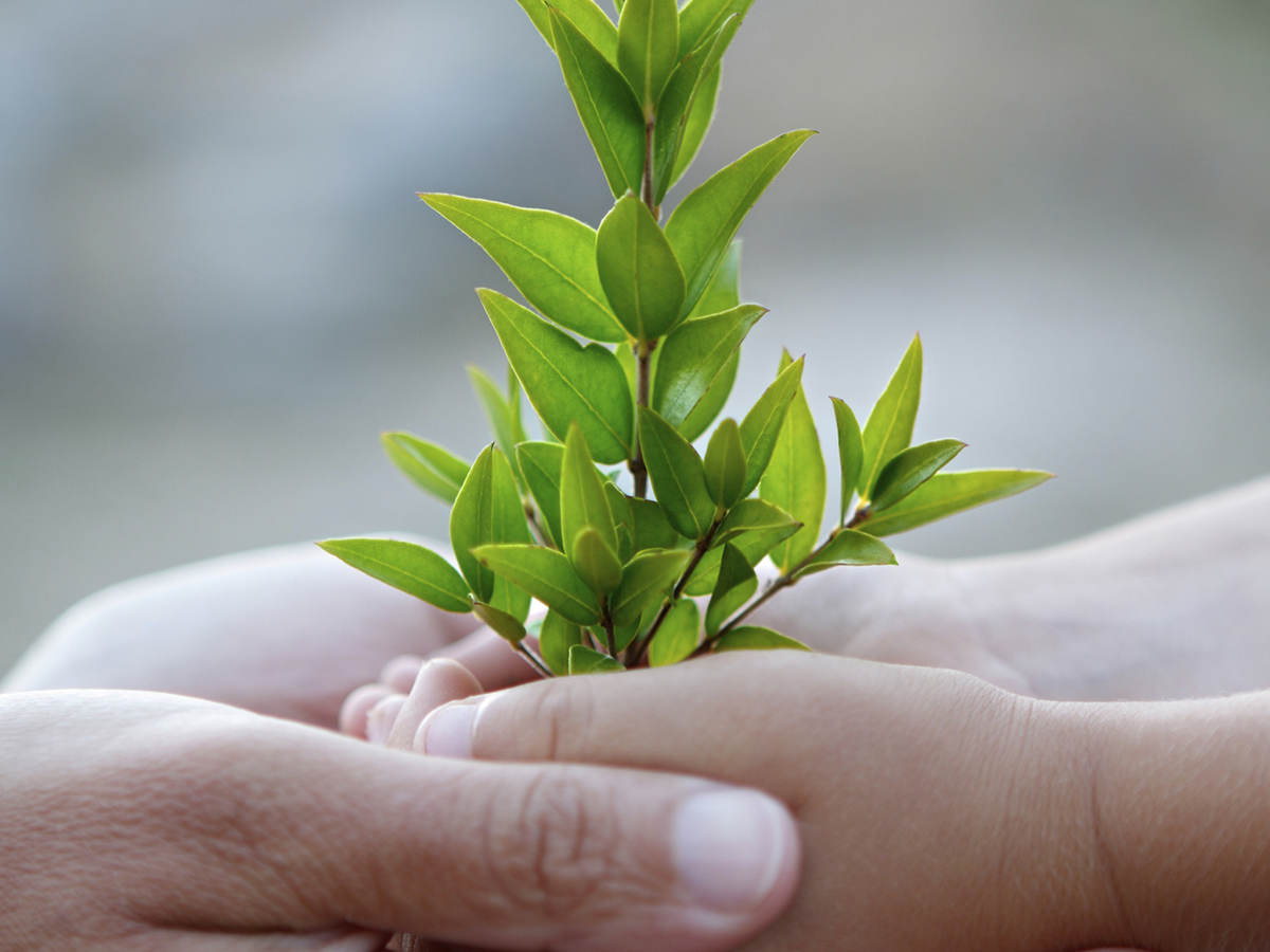 Small tree held in the hands of both a child and an adult.