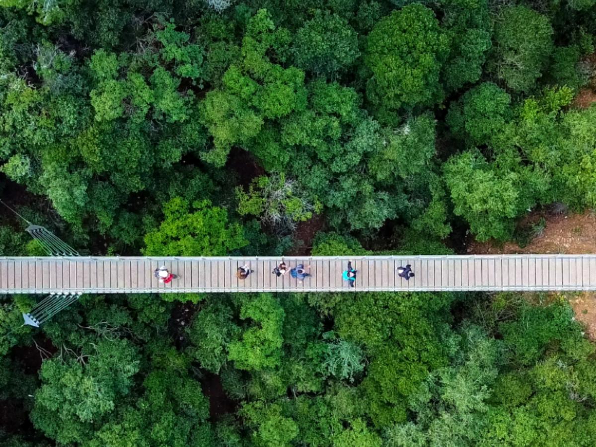People on suspension bridge over tree tops