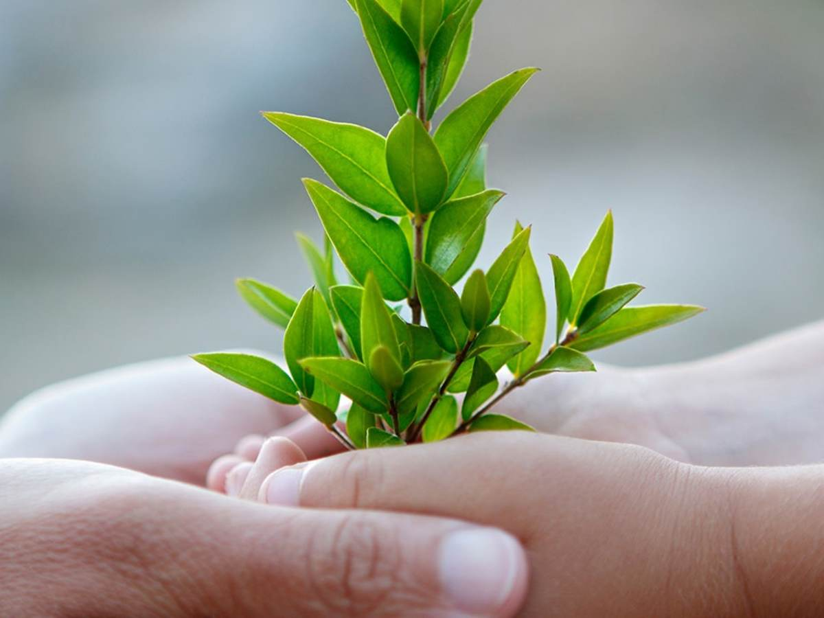Adult hands enclosing a child's hands holding a tree