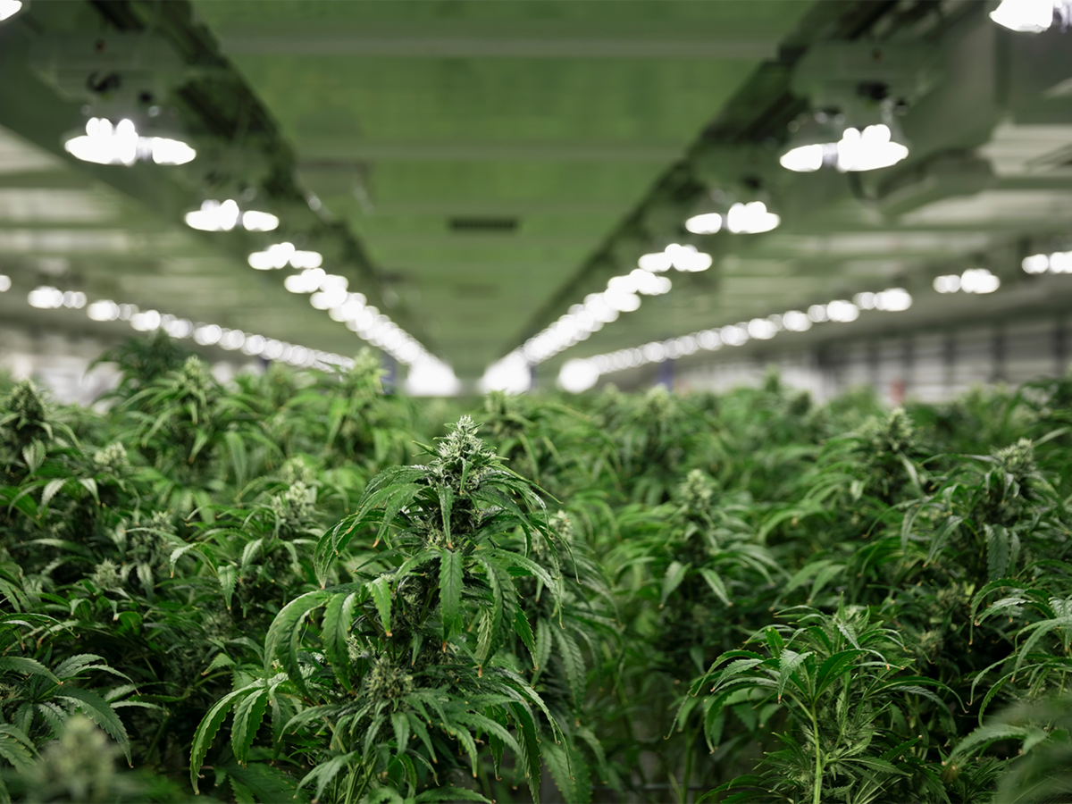 Legal Cannabis Industry Solutions