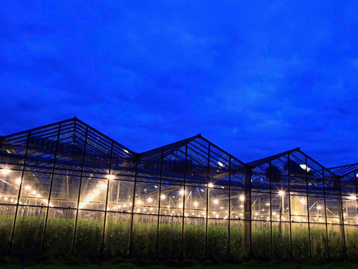 An outside view looking in on a cannabis farm.