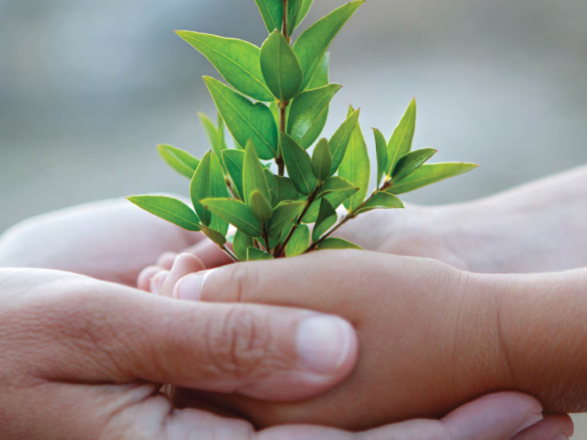 Photo of young and older person cupping hands to shelter a small plant