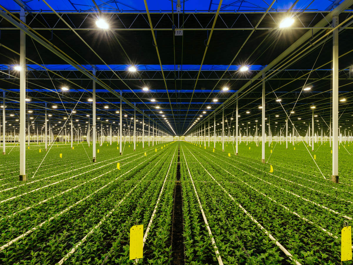 Horticultural lighting greenhouse lighting farming