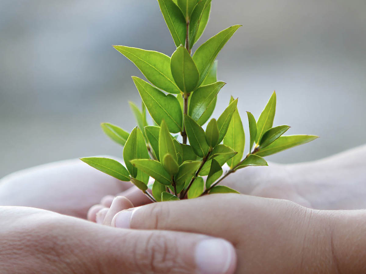 Adult and child hands holding small plant in support of corporate sustainability
