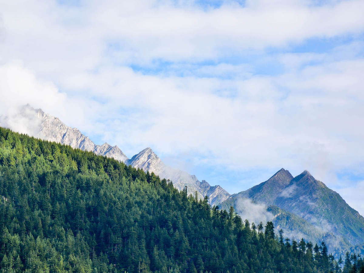 Photo of a mountain range with trees in foreground
