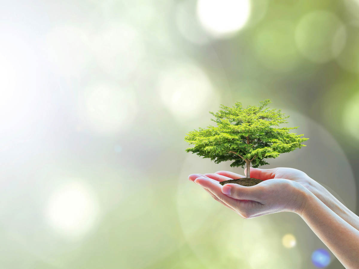 Extended hand with tree growing in the person's palm