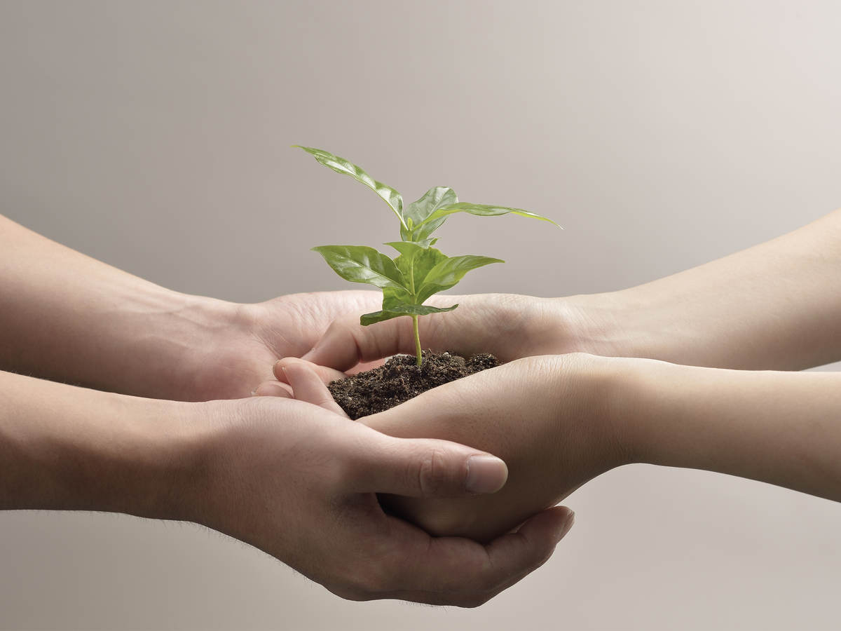 Woman and man hands holding a small green plant seedling