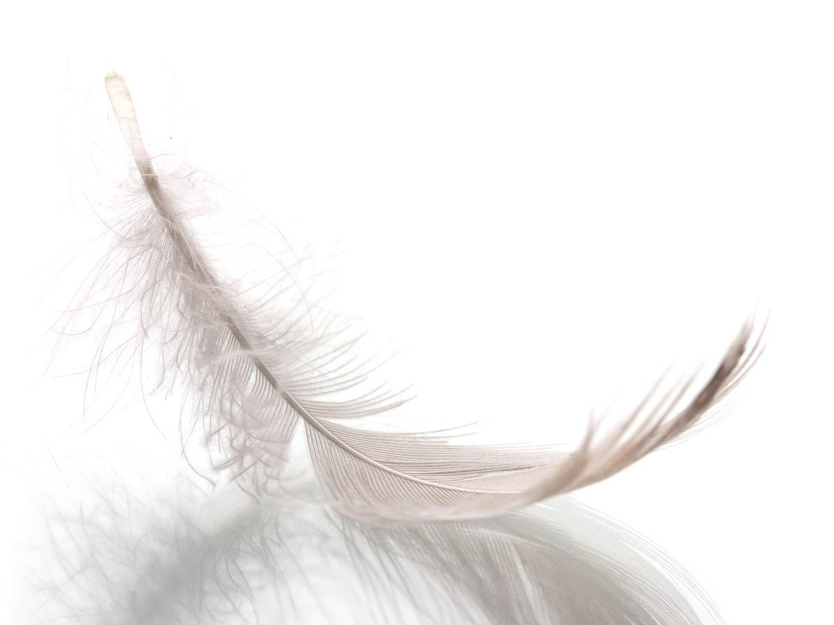 a photo of a floating feather