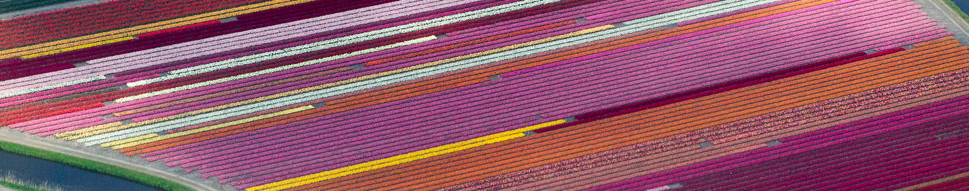 aerial photo of a flower farm