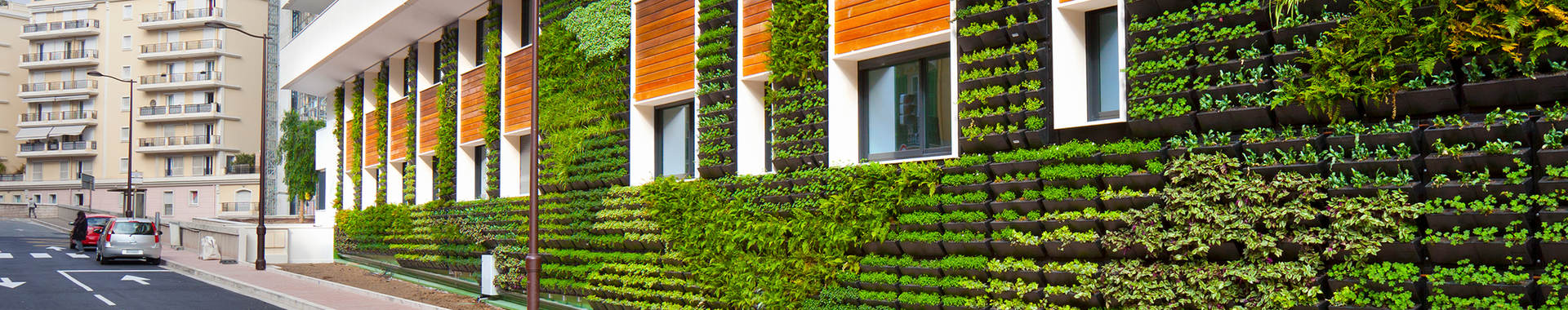 Building with garden vertical garden growing on wall
